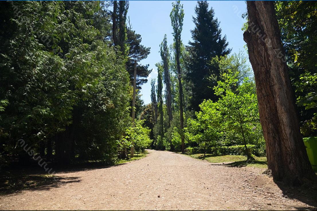 Դենդրոպարկ